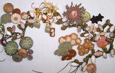 shells, sea life and kelp