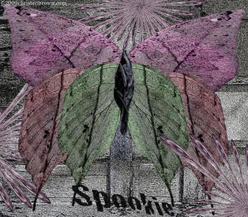 Spooky moth