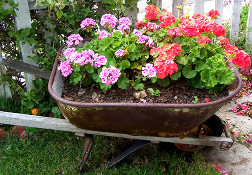 wheel barrow flower pot