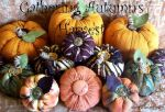 gathering autumns harvest